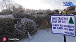 Christmas Tree Drop-off Sites Open Boxing Day