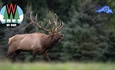WISCONSIN'S 2020 ELK HUNTING SEASON ENDS ON HIGH NOTE