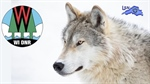 DNR Continues Partnership With USDA  To Manage Wolf Conflicts