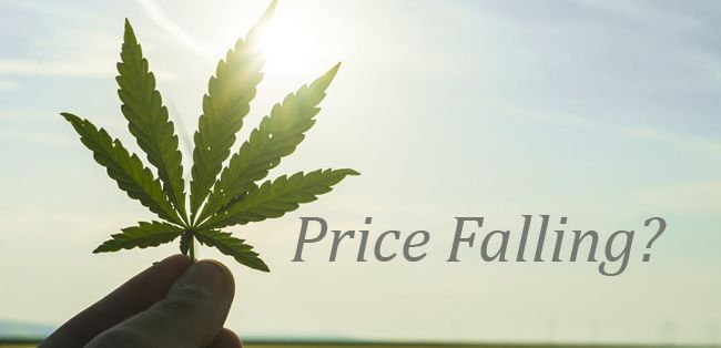 Price of Cannabis Falling?  Lake Superior News