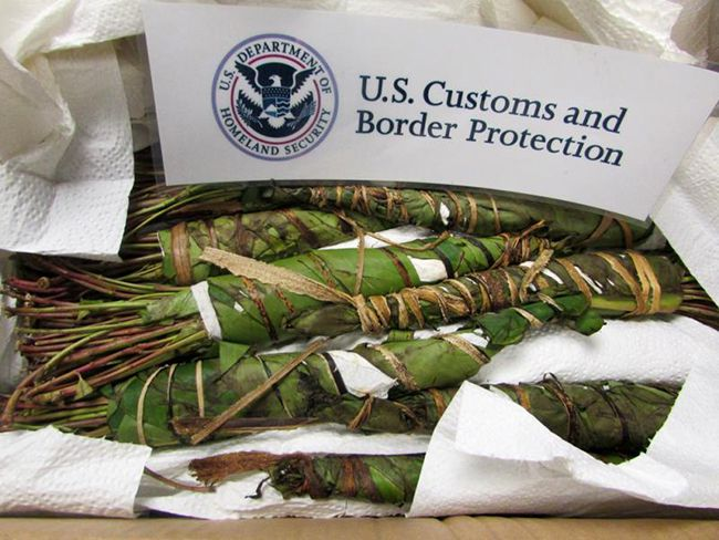 Seized 69 Pounds of Khat  Lake Superior News