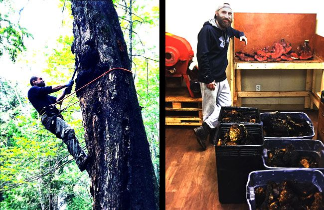 TruNorth Chaga  Lake Superior News