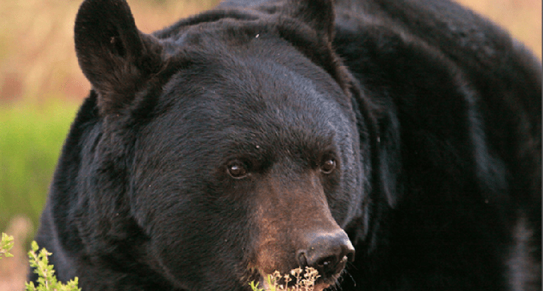 Utah Bear  Lake Superior News
